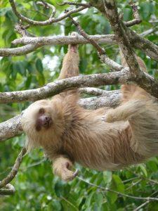 sloth-costa-rica-1333288-639x852